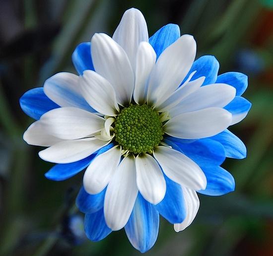 Gerbera Daisy_Flowers Garden Love