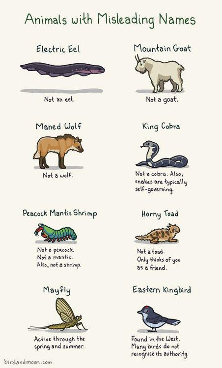 animal with misleading names