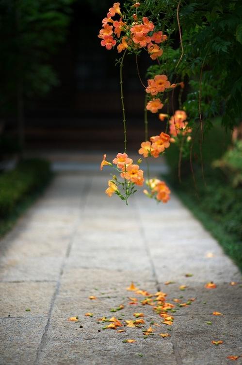 vine blossoms_tokyo_japan_by kristen