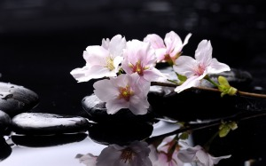 zen_stones-flowers_Desktop_Wallpapers_1920x1200