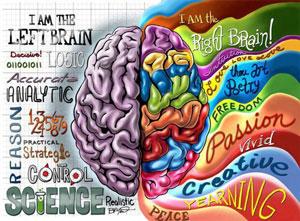 cerebro-lados