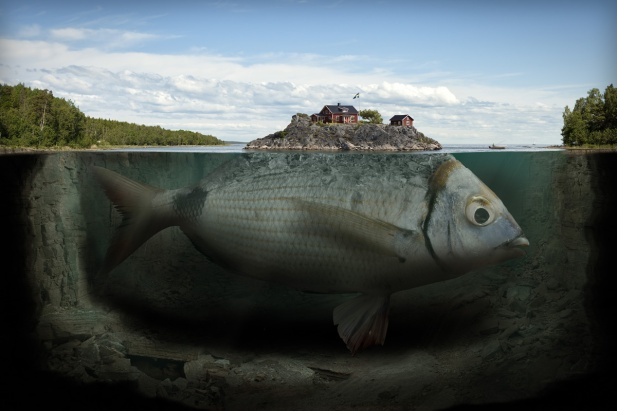 fishy-island