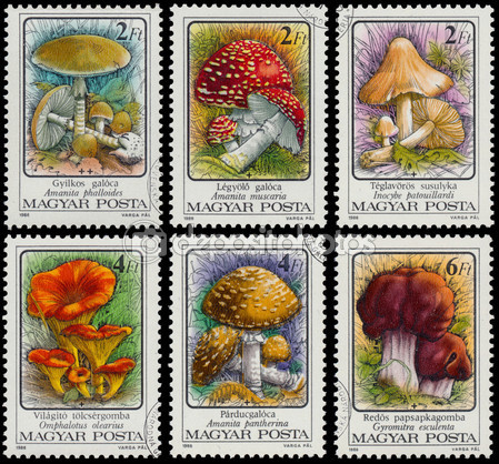 Hungary-shows-Poisonous-mushrooms