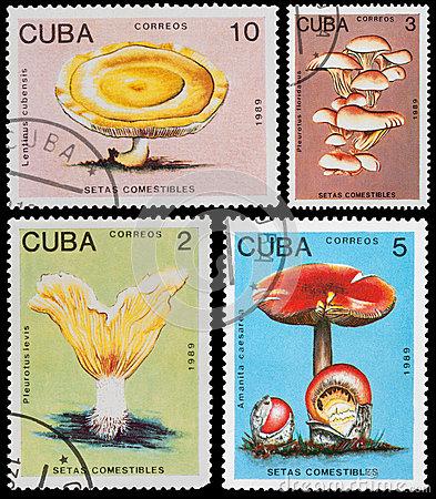 mushroom-cuba-circa-post-stamp-printed-cuba-shows-circa-50941630