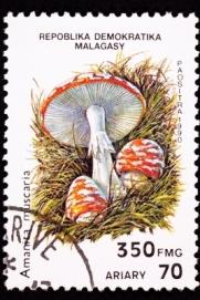 Mushroom Stamp_595