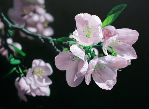 Apple-Blossoms-acrylic-on-canvas-Jason-de-Graaf
